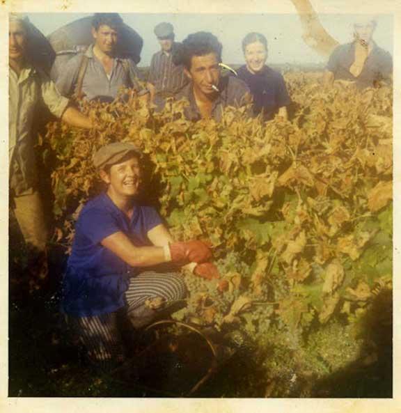 Fotos antiguas Valle del Jerte. Recolectando la uva