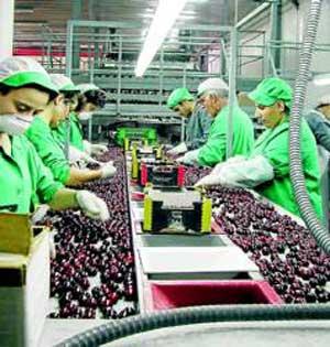 Trabajos Agrupacion Cooperativas Valle del Jerte
